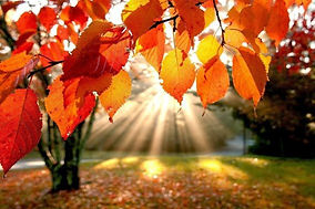 automne-hiver-nature.jpg