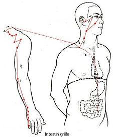 F-intestin grele.jpg