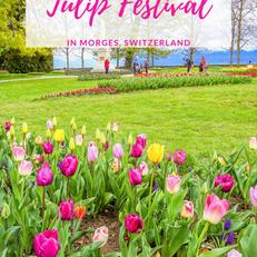 Фестиваль тюльпанов в Морже «50 бис»