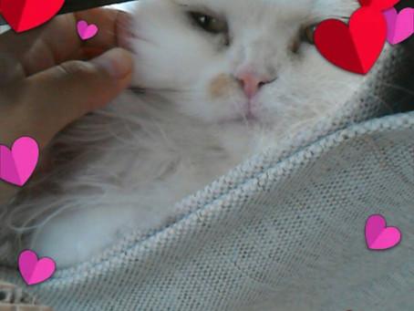猫カフェで癒されて来ました。