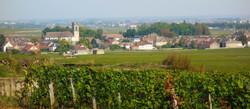 De beroemde wijnstreek