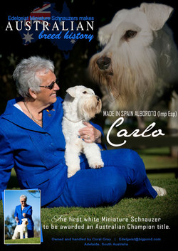 Carlo Advert 1