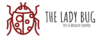 ladybug image.png