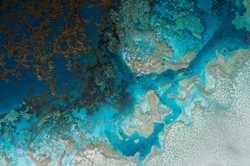 Ocean Artist -  Petra Meikle de Vlas18.png