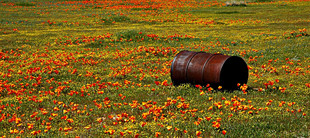 Poppies & Barrell