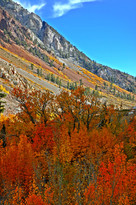 Sierra Fall Colors