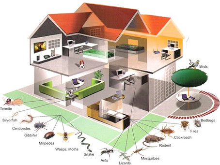 Blog - Pest Control, And exterminator services In Los Angeles, Ca.