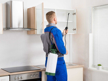 Blog - Pest Extermination Services At Your Service In Los Angeles, CA.