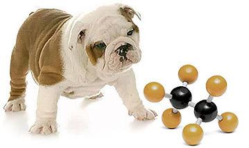 totw-dog-food-nutrient.jpg