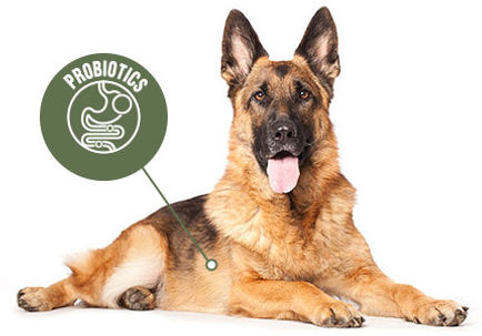 totw-dog-food-immune-support.jpg