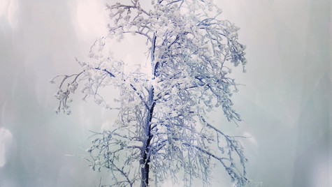 Winter, Belgium, 2021