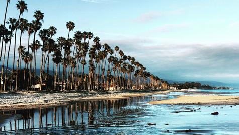 Palm trees, Santa Barbara, USA, 2019