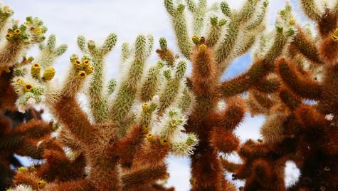 Saguaro National Park, USA, 2019