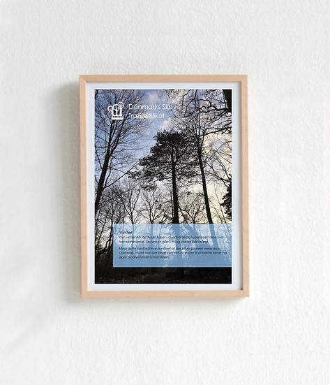 Træcertifikat -Vinter