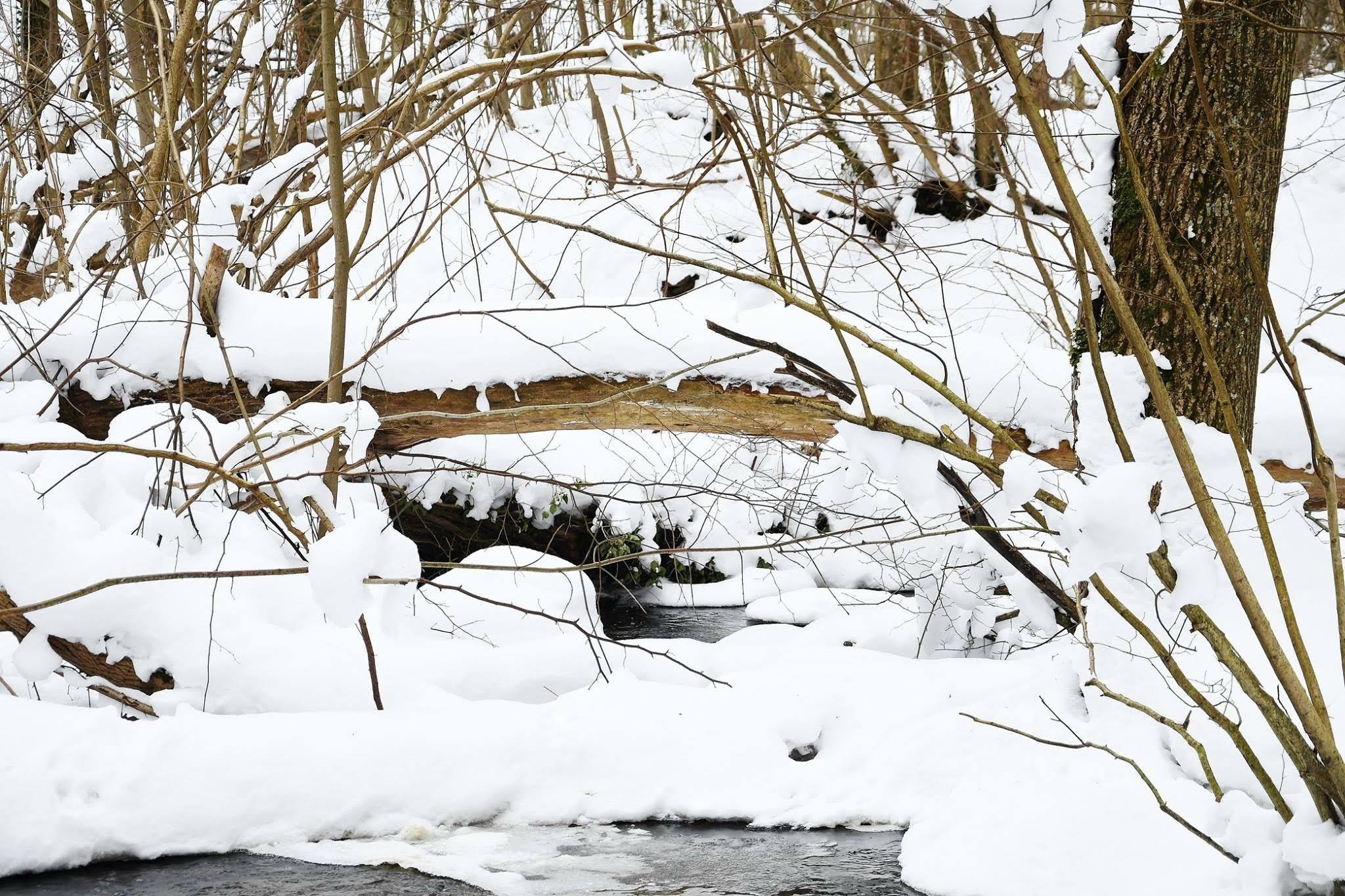 #vinterskov