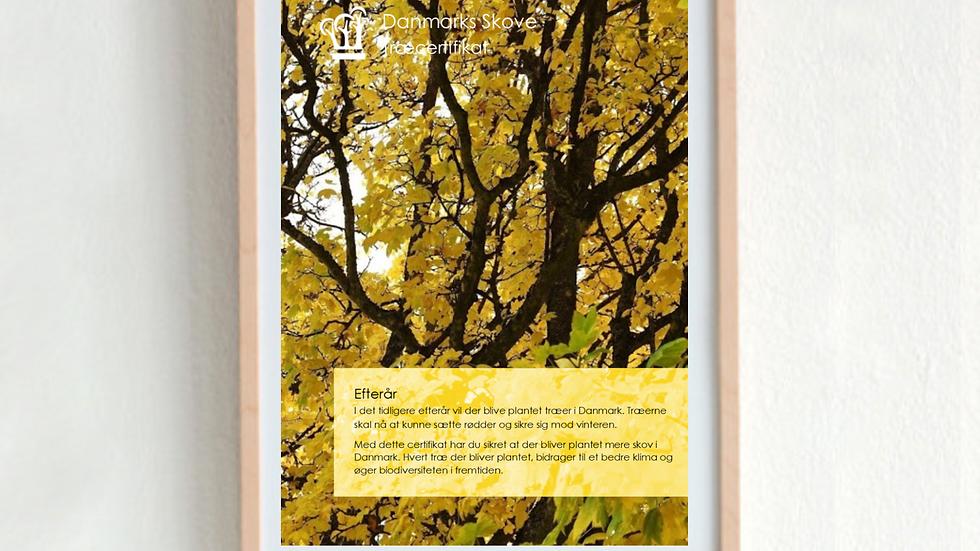 Træcertifikat - Efterår