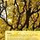 Thumbnail: Træcertifikat - Efterår