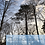 Thumbnail: Træcertifikat -Vinter