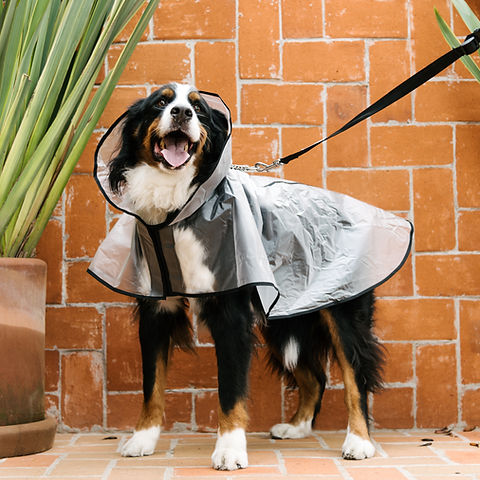 raincoat dog, waterproof, water resistant, fabric, dog water, rain, raincoat