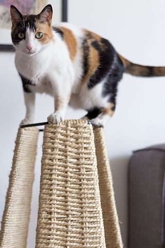 cat scratcher, scratch, accessory, furniture,