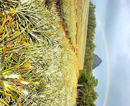Pineapple Farm under Rainbow.jpg