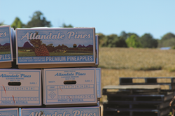 Allandale Pines - The Link