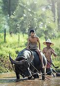 buffalo-1807517_960_720.jpg