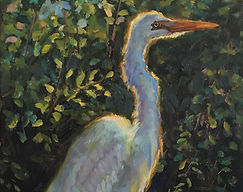 In the Still of the Sunset - Great Egret