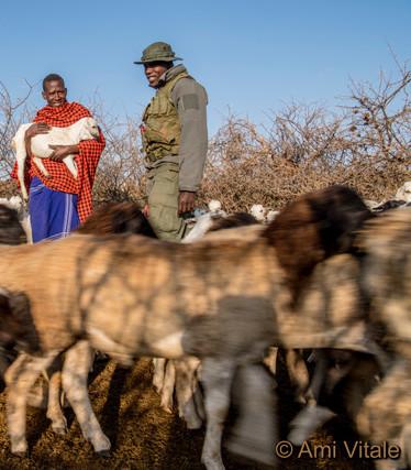 Herder and lion ranger