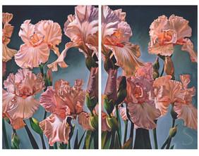 """""""Irises of Vinsetta"""""""
