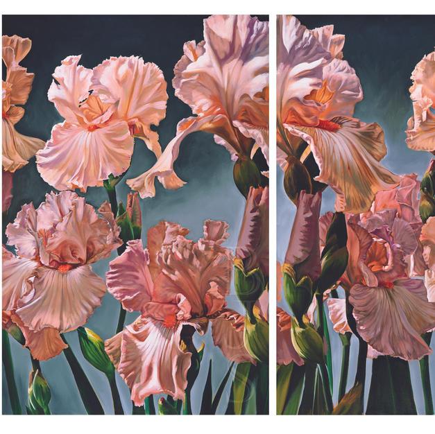 Irises of Vinsetta.jpg
