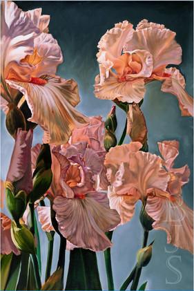 """""""Irises of Vinsetta"""" (right panel)"""