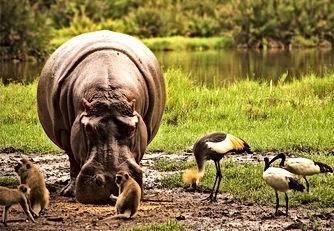 africa_kenya_animals_feeding.jpg