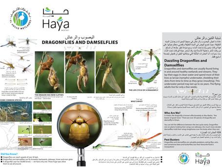 Al Ansab –– Damselflies and Dragonflies