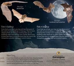 Hamilton-Fynch Bats.jpg