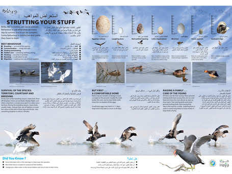 Al Ansab –– Bird Breeding Behaviour