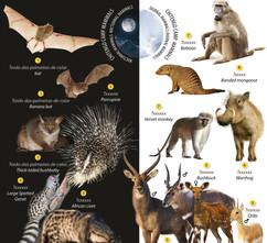 Hamilton-Fynch Mammals.jpg