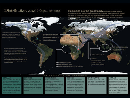 Global Distribution Hominoids
