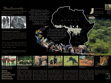 Biodiversity in Central Africa