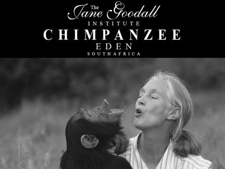 Jane Goodal Institute Chimp Ede