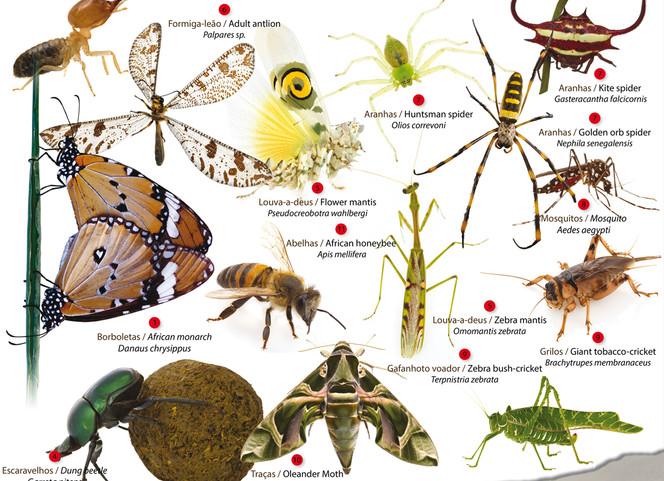 Hamilton-Fynch Insects.jpg