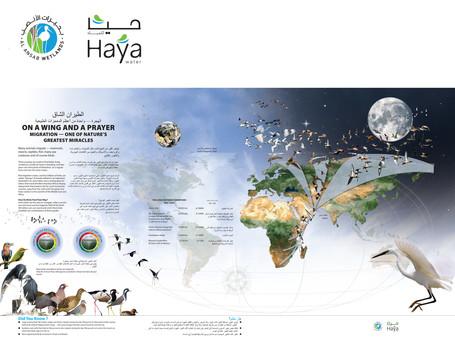 Bird Migration Routes to Al Ansab