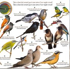 Hamilton- Fynch Birds.jpg