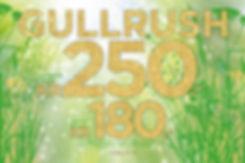 gull-1200x800.jpg