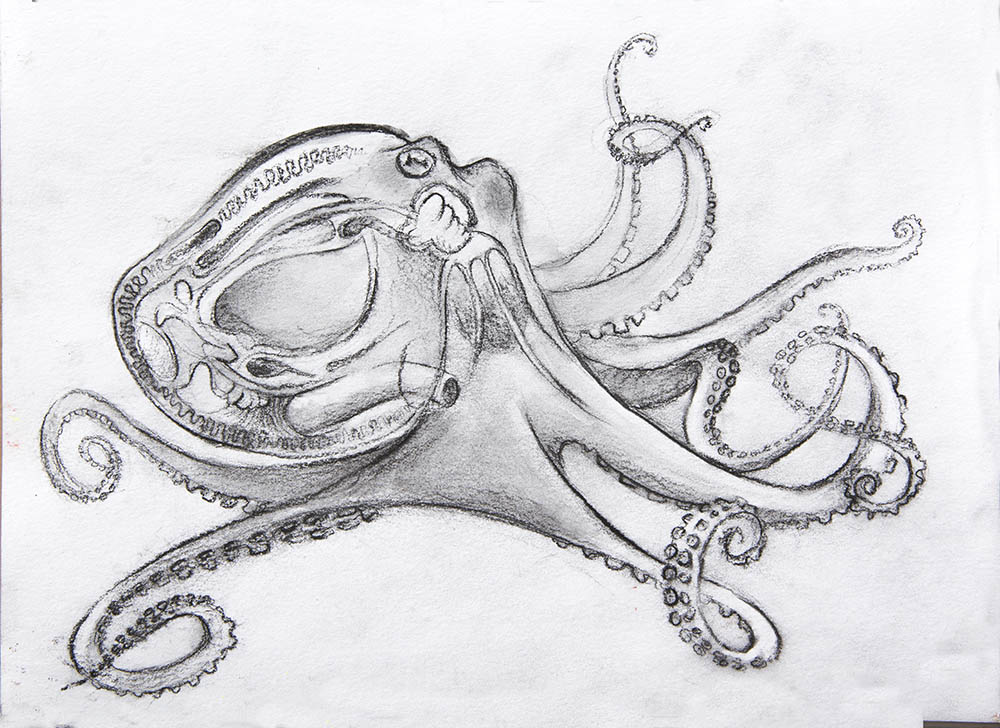 Sophisticated Octopus