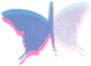 BF.8.Blue.Hotpink.png