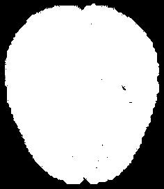 brain hvid.png