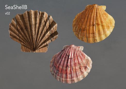 Kelloggs_SeaShells_B_02.jpg