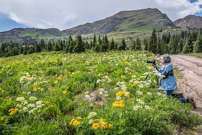 Workshop Flower Field - Melissa Lipton P