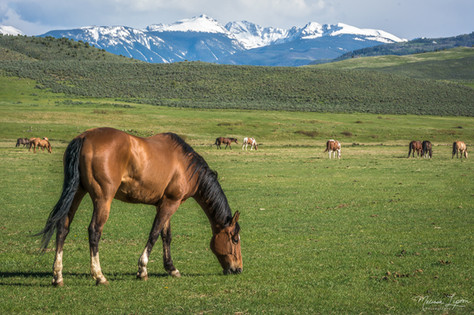 Grazing on the Ranch